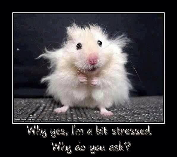 im a bit stressed